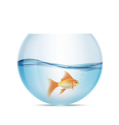 Goldfish floats in a aquarium vector