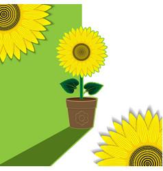 green-white plant background flower sunflower vector image