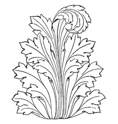Leaf displayed is often used as a design on roman vector