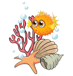 An orange puffer fish near the seashells vector image