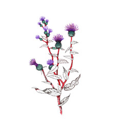 hand drawn painting with colorful flowers on white vector image vector image
