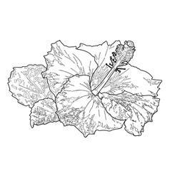 hibiscus flower line vector image