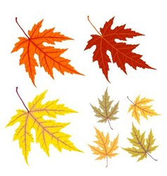 Yellow and red autumn leaf vector