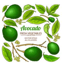 avocado set vector image