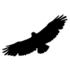 Black silhouette of buzzard vector