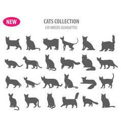 cat breeds icon set flat style isolated on white vector image