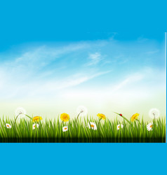 nature background with dandelions and daisies vector image