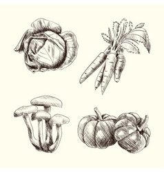 Vegetable set sketch autumn vector image