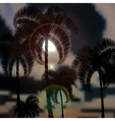 Tropical palm trees before the storm sun rays vector
