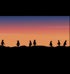 Beauty landscape at night penguin silhouettes vector