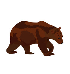 big animal bear grizzly isolated vector image