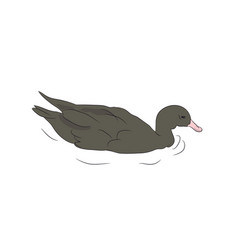 duck drake vector image