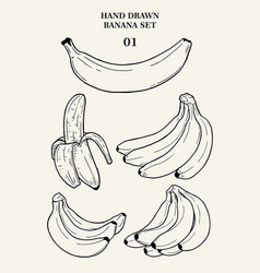 Hand drawn banana set 01 vector