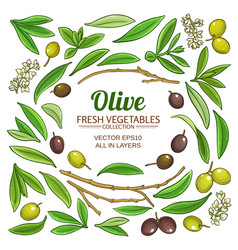olive elements set vector image