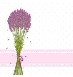 Purple Lavender Flower vector image vector image
