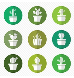 group of cactus in the circle vector image