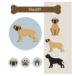 Mastiff dog breed infographic vector