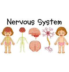 Nervous system of little girl vector