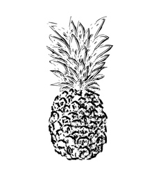 Pibapple sketch vector