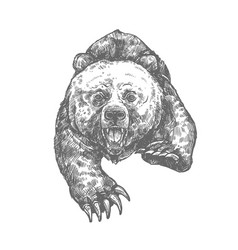 bear attack isolated sketch of aggressive animal vector image