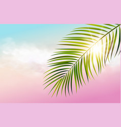 Green leaf palm tree on white background vector