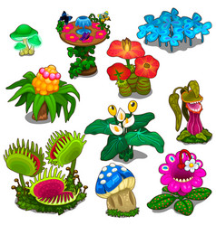 Set of different flowers mushrooms and berries vector