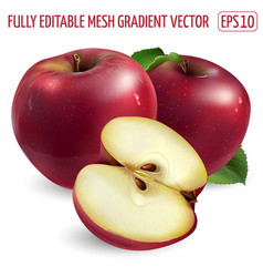Two red apples and a half on white background vector
