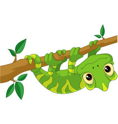 Chameleon on branch vector