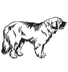 decorative standing portrait of dog leonberger vector image