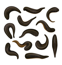 Leeches hirudotherapy medicine and treatment vector