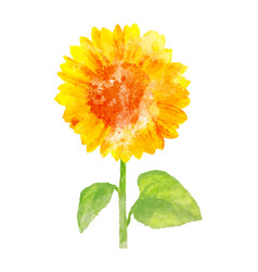 watercolor sunflower on white vector image vector image