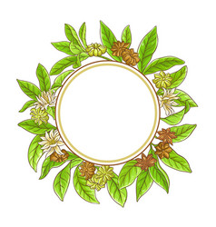 Anise branches frame vector