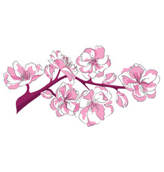 cartoon branch cherry blossoms vector image