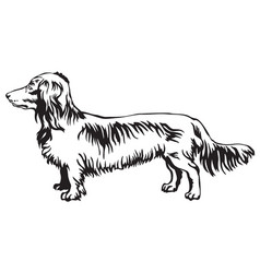 Decorative standing portrait of dog long-haired vector