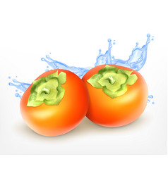 fresh juicy persimmon vector image