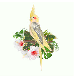 yellow cockatiel cute tropical bird funny parrot vector image