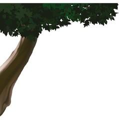 Deciduous Tree vector image vector image