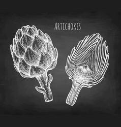 chalk sketch of artichokes vector image