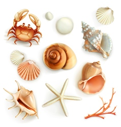 Seashells set icons vector image vector image