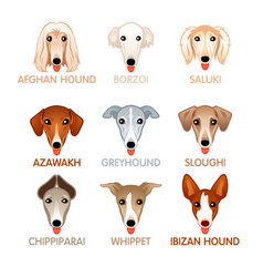 Cute dog icons set v vector