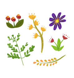 Floral elements spring or summer foliage flora vector