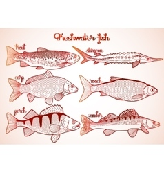 Graphic freshwater fish collection vector image