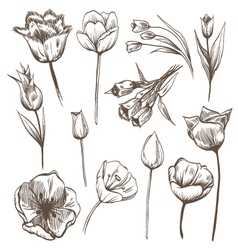 Hand drawn tulips flowers set vector