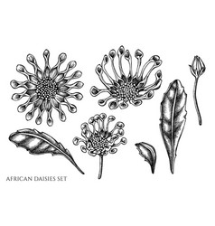 set hand drawn black and white african vector image