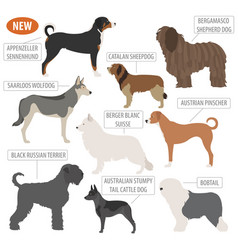 Shepherd dog breeds sheepdogs set icon isolated vector