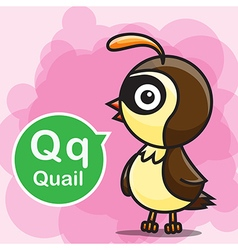 Q Quail color cartoon and alphabet for children to vector image