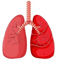 Lung diagram with pneumonia vector image vector image