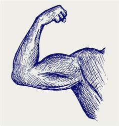 Strong biceps vector image vector image