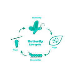 Butterfly life cycle in monochrome style vector