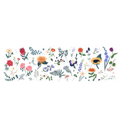 Collection wild blooming meadow flowers vector